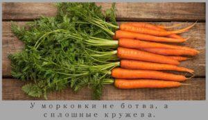 morkov-polezna