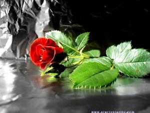 flowers52