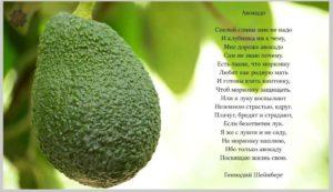 avokado-polza-i-vred-1